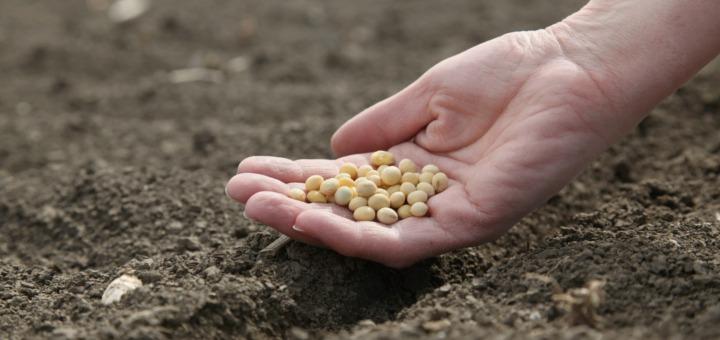 Navarra fomentará el sector ecológico