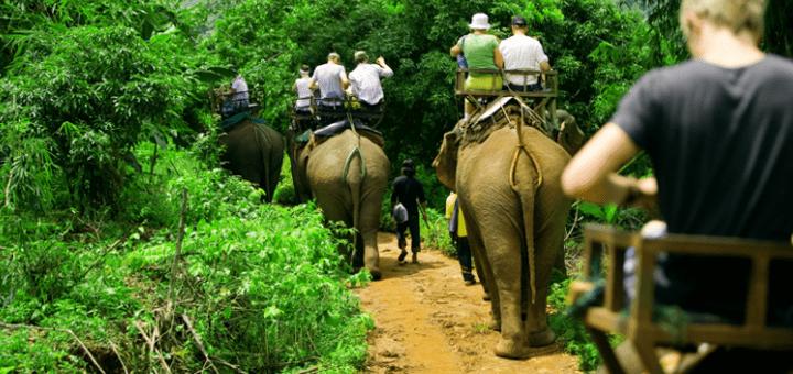 Turismo y respeto animal